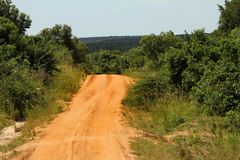 Road disappearing into the Jungle. A road disappears down into the jungle in Africa royalty free stock photography