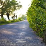 Road into the distance. Trees and bushes in the background Royalty Free Stock Images