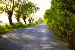 Road into the distance. Trees and bushes in the background Stock Image