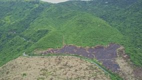 Road Divides Highland into Green Jungle and Felled Terrain stock video