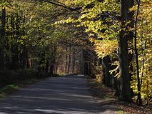 Road drive in desolate forest avenue with two rows of trees sides near city of BIELSKO-BIALA in Poland. Road drive in desolate forest avenue landscape with two Stock Image