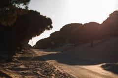 Road between dunes and trees on the beach Punta Paloma, Cádiz, Spain royalty free stock photography