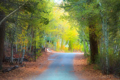 Road in early autumn time Stock Images