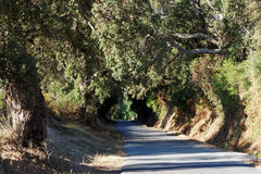 Road in eastern plain of Corsica Stock Photo