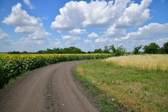 Road on edge of a field with blooming sunflower. Road on the edge of a field with blooming sunflower royalty free stock images