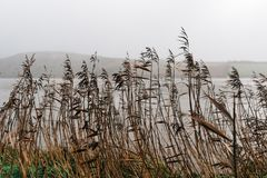 Road edge filled with rushes. Against sea and misty mountains Stock Image