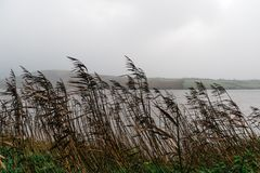 Road edge filled with rushes. Against sea and misty mountains Royalty Free Stock Images