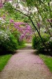A road in El Capricho Garden in Madrid surrounded by violet Cercis siliquastrum plants Foreset Pansy and covered by petals. A road in El Capricho Garden in Stock Image