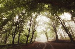 Road through enchanted foggy forest Stock Photography