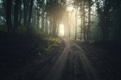 Road through enchanted forest with fog with sun rays Royalty Free Stock Photography