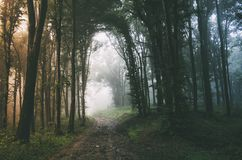 Road through enchanted forest with mysterious fog Stock Photos
