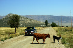 Road Encounters. Country road in Colorado Mountains Stock Image