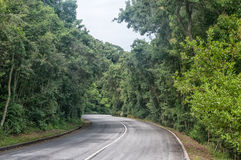 Road from entrance gate to Storms River Mouth. STORMS RIVER MOUTH, SOUTH AFRICA - MARCH 1, 2016:  The road through dense forest from the entrance gate to the Royalty Free Stock Photo