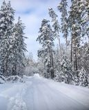 The road at the evening winter forest stock image