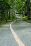 Road in evergreen forest Stock Images