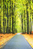 Road in fall. Endless road in fall as an image with high contrast and dynamic stock images