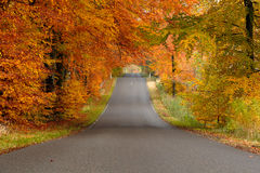Road in fall Royalty Free Stock Images