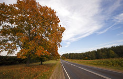 Road in the fall Stock Images