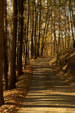 Road in fall forest Royalty Free Stock Photography