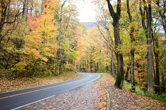 Road in Fall Forest Royalty Free Stock Photo