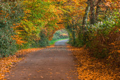 Road in the Fall. Stock Photography