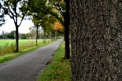 Road in fall Royalty Free Stock Image