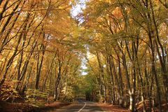 Fall season in a forrest in Romania. A road in fall season in Faget Forrest, in Cluj County, Romania Royalty Free Stock Photography