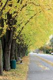 Road in Fall. In Southern Quebec stock image
