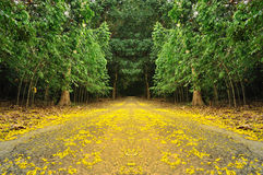 The road into the Fall. Yellow flower Stock Photography