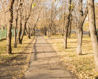 Road with fallen leaves in autumn Park Stock Image