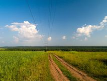 Road in the field. Narrow country road through the green field Royalty Free Stock Image