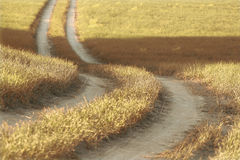 Road in the field Stock Image