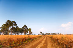 Road in field and blue sky Royalty Free Stock Image