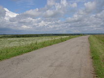 Road in Field of daisies Royalty Free Stock Photos