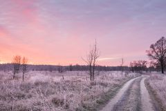 The road is in the field with flowers and grass in white frost at dawn. A beautiful late autumn, the beginning of winter. royalty free stock photo
