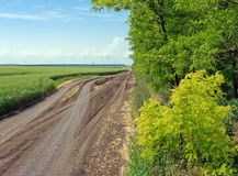 Road between the field and forest Stock Photography
