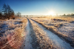 Road through the field with grass Royalty Free Stock Images