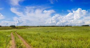 Road in a field with green grass Royalty Free Stock Photos