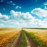 Road in field with harvest and cloudy blue sky Stock Photos