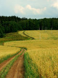 Road in field of oats Royalty Free Stock Photo