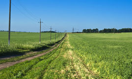 Road in the the field pea Royalty Free Stock Photos