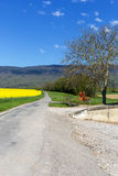 Road in a field with rape near mountain Jura Royalty Free Stock Image