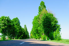 Road with field Royalty Free Stock Image