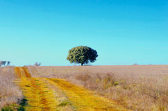 Road in the field Royalty Free Stock Photography