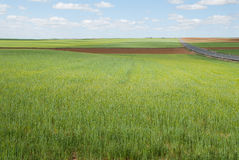 Road, field and sky. Arable Agricultural in central Spain Stock Images