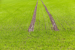 Road in a field Royalty Free Stock Photos