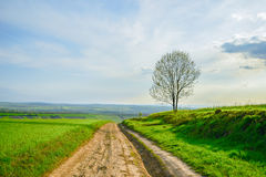 Road in field. Summer tree Royalty Free Stock Images