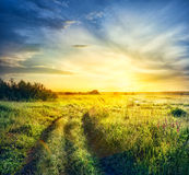 Road in field with thick grass Stock Photography