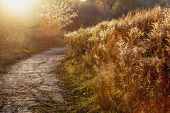 The road on the field with a tree, sunset light. Late summer or early autumn stock image