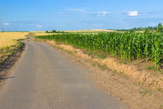 Road among field Royalty Free Stock Images